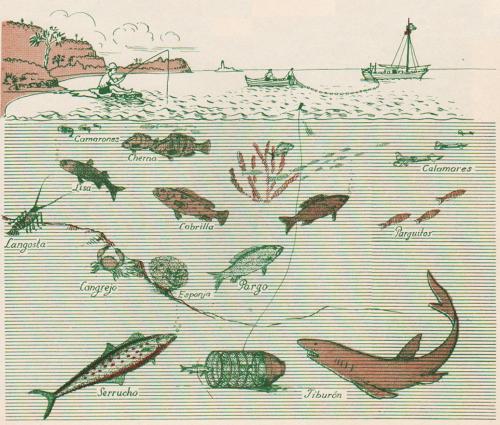 raisz_atlas_of_cuba_p25_fish